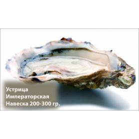 Устрицы Императорские 200-300 грамм.