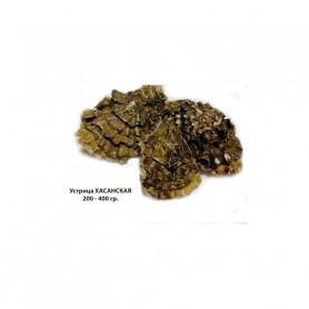 Устрица хасанская, крупная