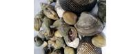 Мореокеан | Продажа и Доставка Моллюсков со склада в Москве