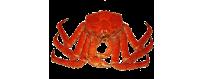 Купить Краб Камчатский живой или подарочный. Цена 2500 руб/кг.